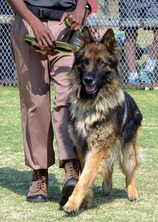 formation chien